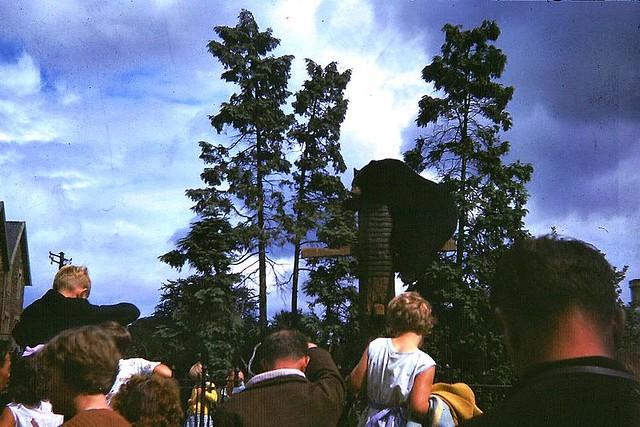 Bristol Zoo 1960s - The Bear Pit