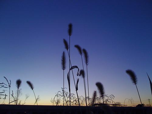 grass japan sunrise iphone