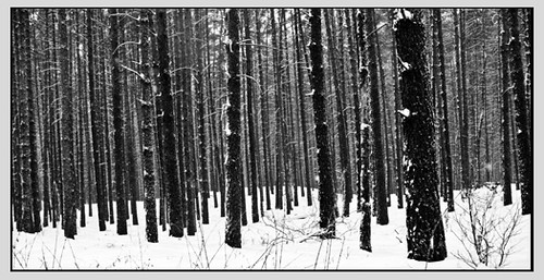 structured forest