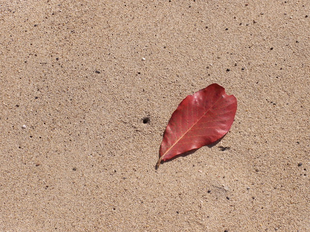 leaf in the sand