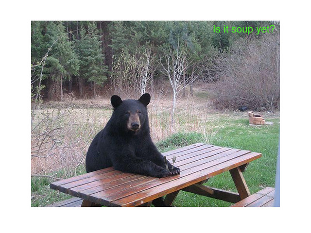 Bon Bear At Picnic Table | A Slightly Modified Picture Of A Bear ...