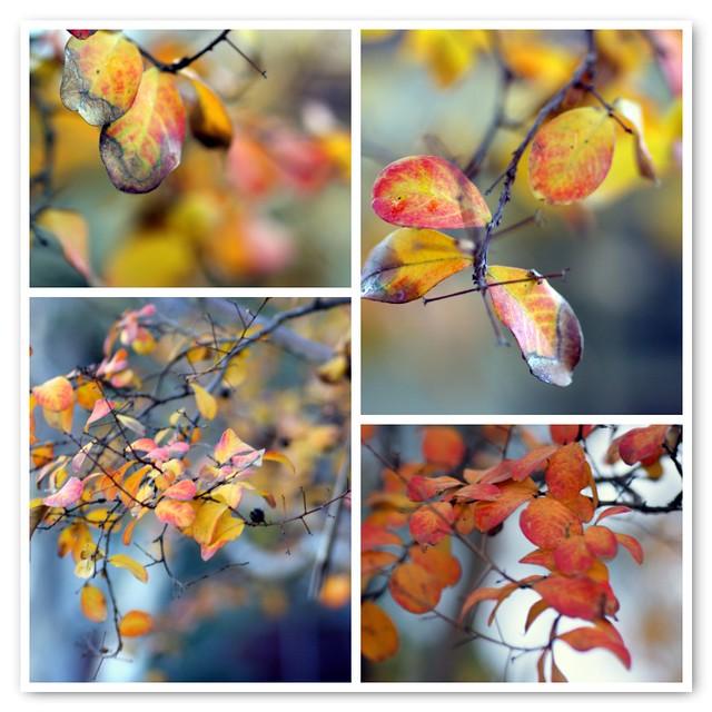 How I love autumn