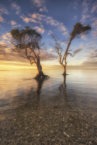 beachmere australia aaronbishopphotography mangroves trees seascape sunrise southeastqueensland ngc nikond600 dancers disco d600 beach clouds goldenhour landscape nikon ocean yellow sky
