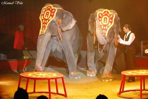 DSC_0610 Circo ATAYDE HNOS simplemente extraordinario espectáculo por LAE Manuel Vela