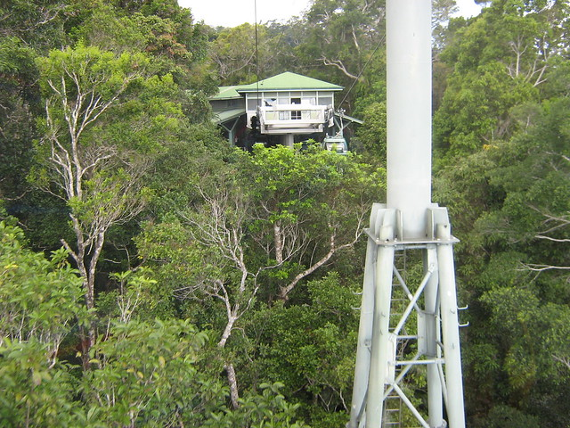 view from skyrail rainforest cableway