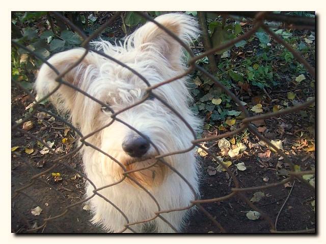 DOG.My new friend from my way-Új haver út közben