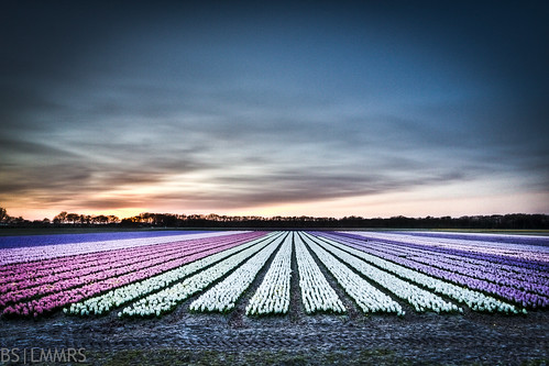 Colorpalet of flowers | by Bas Lammers