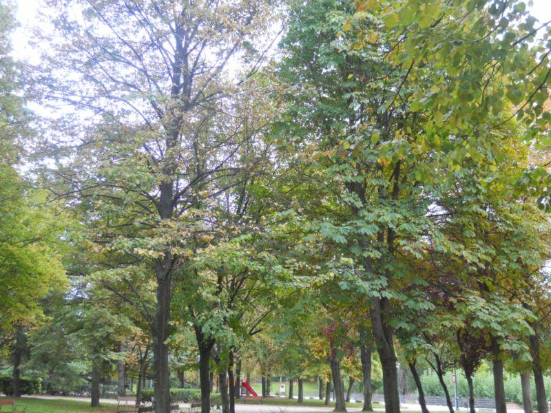 Árboles en otoño 3