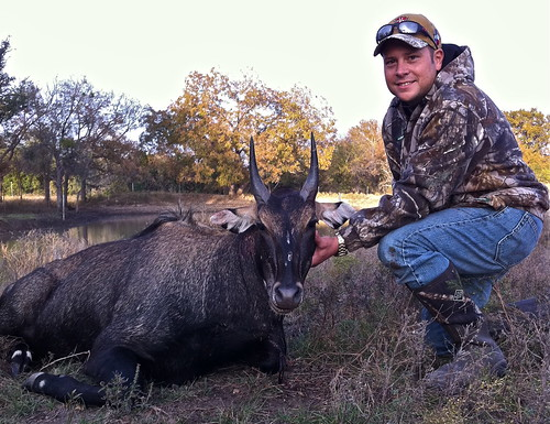Nilgai | by Hunting Texas Trophies | VBHARRE Ranch