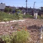 Rose Street Community Garden
