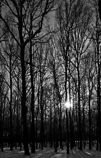 Sun behind the tree