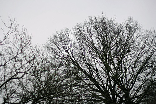 gray skies | by thelynnied