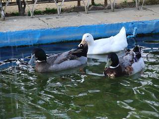 anatomía del parque de la victoria de jaén: fuente de los patos | by olgaberrios