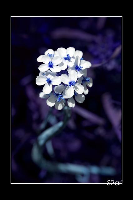 blue flower par Karim SAARI