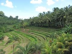 Bali_5_4981 | by sbamueller