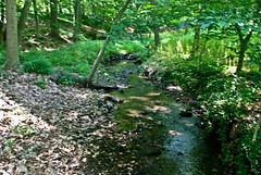 Druid Hill Park stream