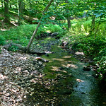 Druid Hill Park stream