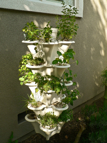 Hydroponic Herb Garden | by Cloudforest