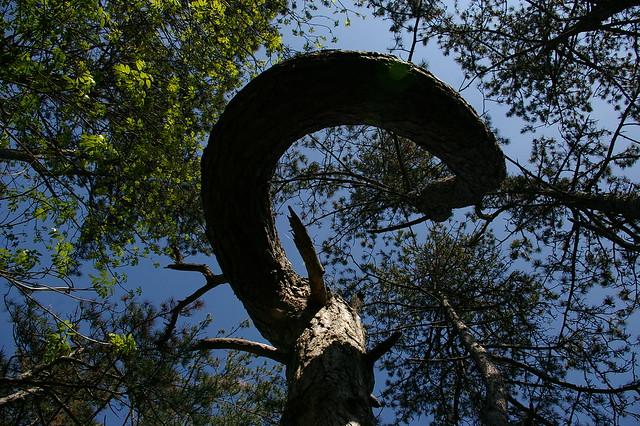 .heppà. .anche agli alberi gira la testa.