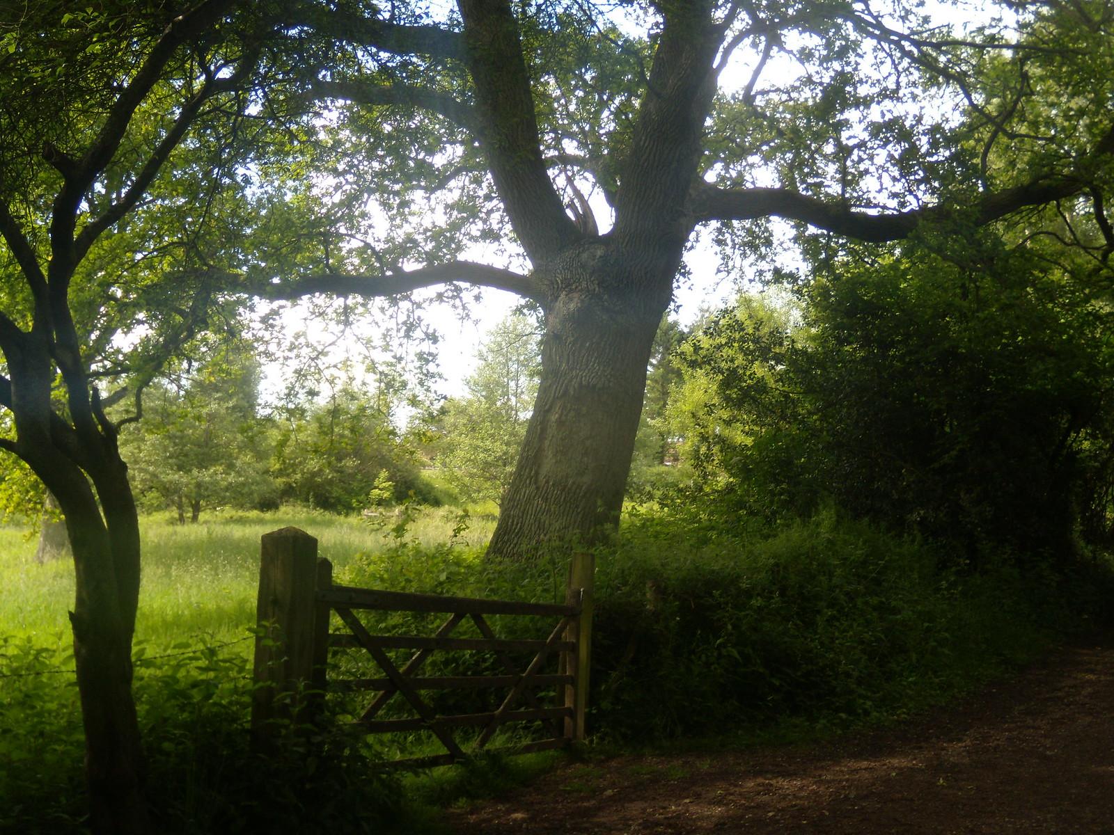 Gate and tree Ashurst Circular