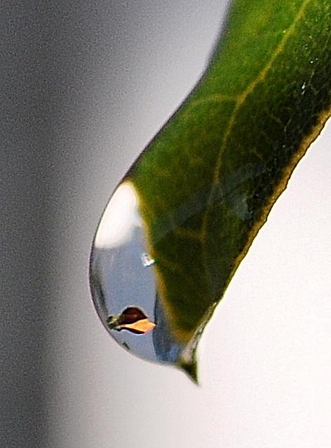 Dew drop close-ups #3