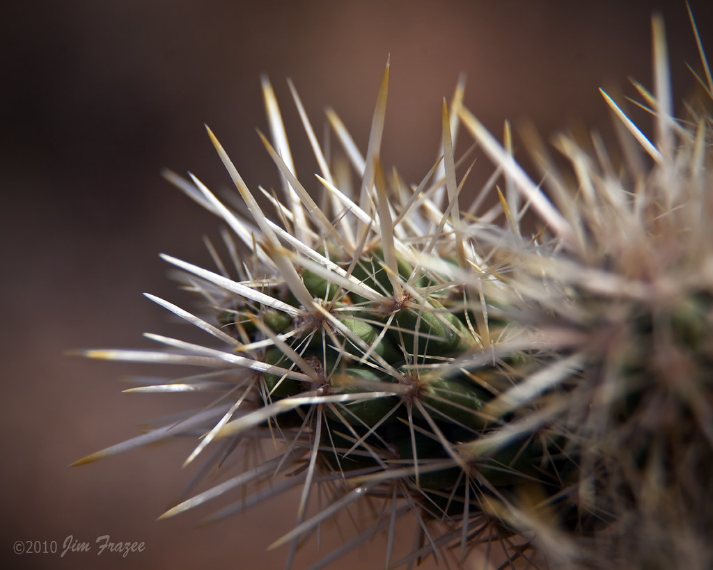 Why you shouldn't remove a cholla with your fingers: by Jim Frazee