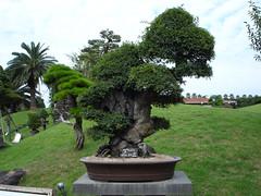bonsai | by stone sculpture