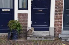 Delfshaven cat