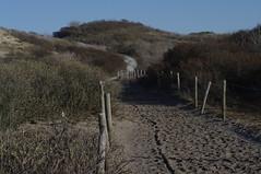 Kijkduin dune path