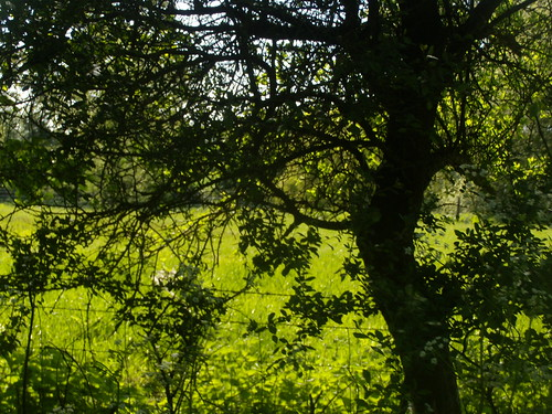 Sun through shade Overton circular