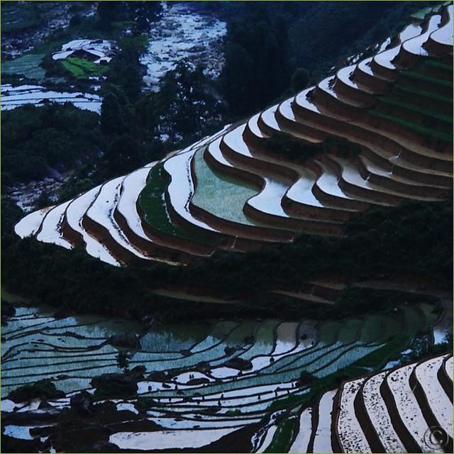 Dusk Rice Paddies Work of Art