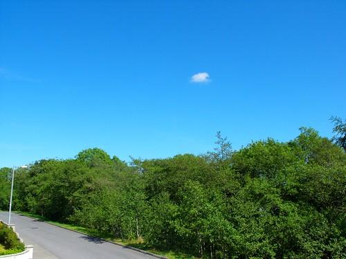blue trees sky verde green alberi blu cielo finepix fujifilm s1000fd