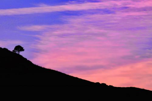 sunset italy tree canon italia hill sicily catania sicilia caltagirone canonef70200mmf28lusm canoneos50d canon50d caltaggiruni