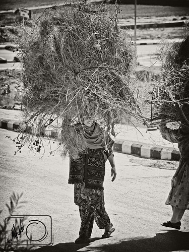 poverty street wood girls pakistan high women key day afternoon sunday poor working streetphotography sunny stack highkey fuel sunnyday islamabad pathan sunnyafternoon dhok pakhtoon pushtoon photographjy kantraal poorpathangirl poorpukhtoongirl dhokkantraalislamabad