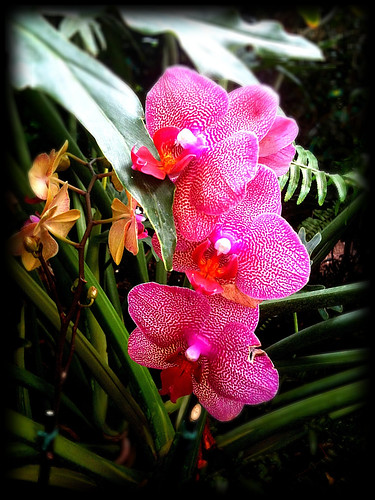 Orchids at New York Botanical Garden | by The Shared Experience