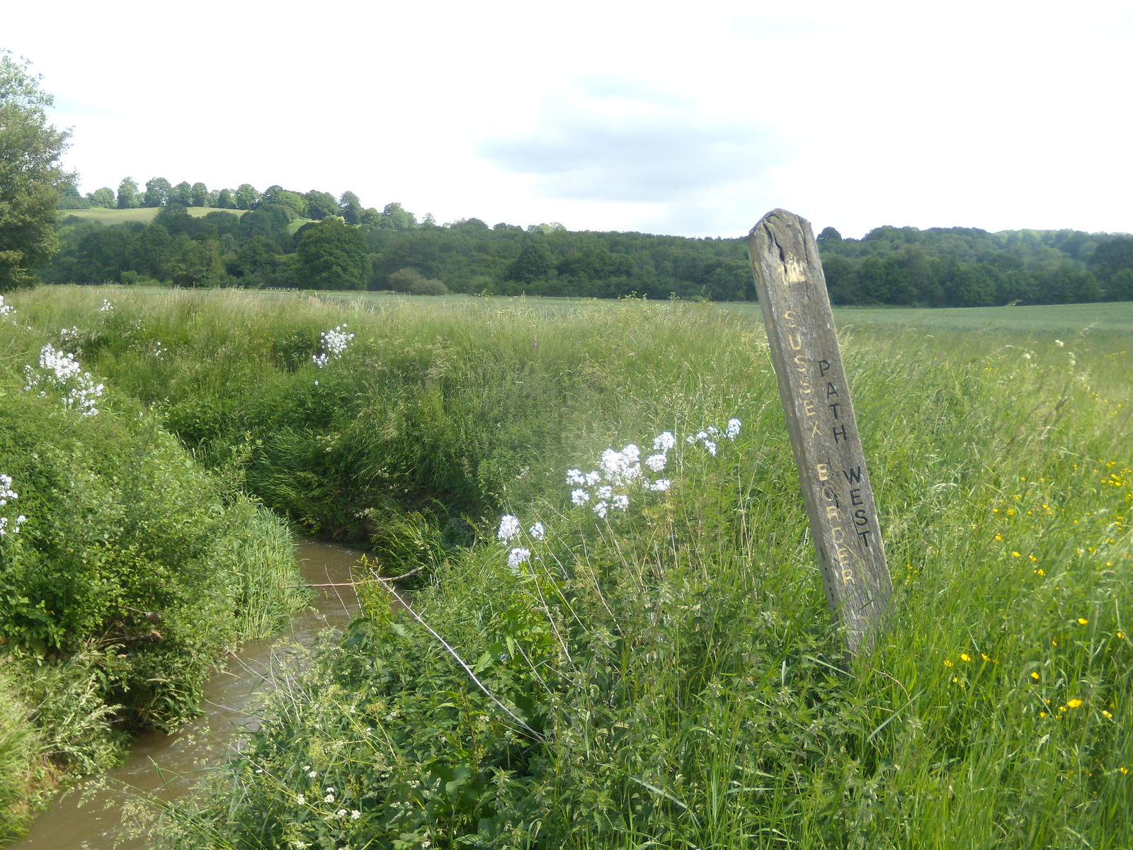 Post by the river Mystery white flowers Ashurst Circular