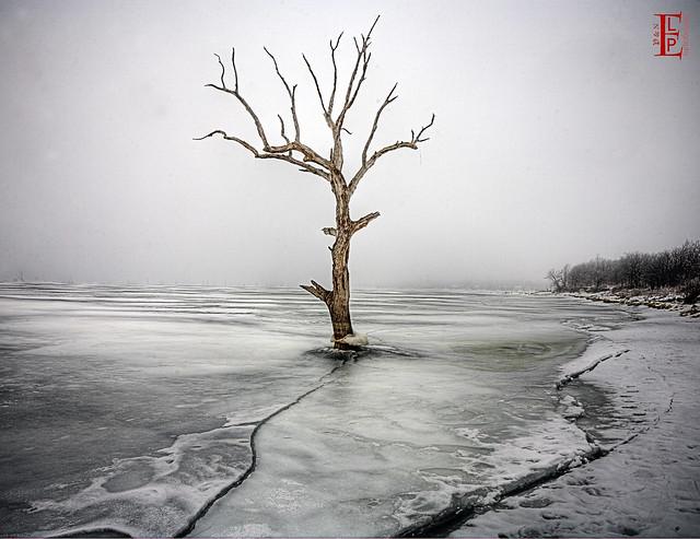 Ice, Fog, Tree