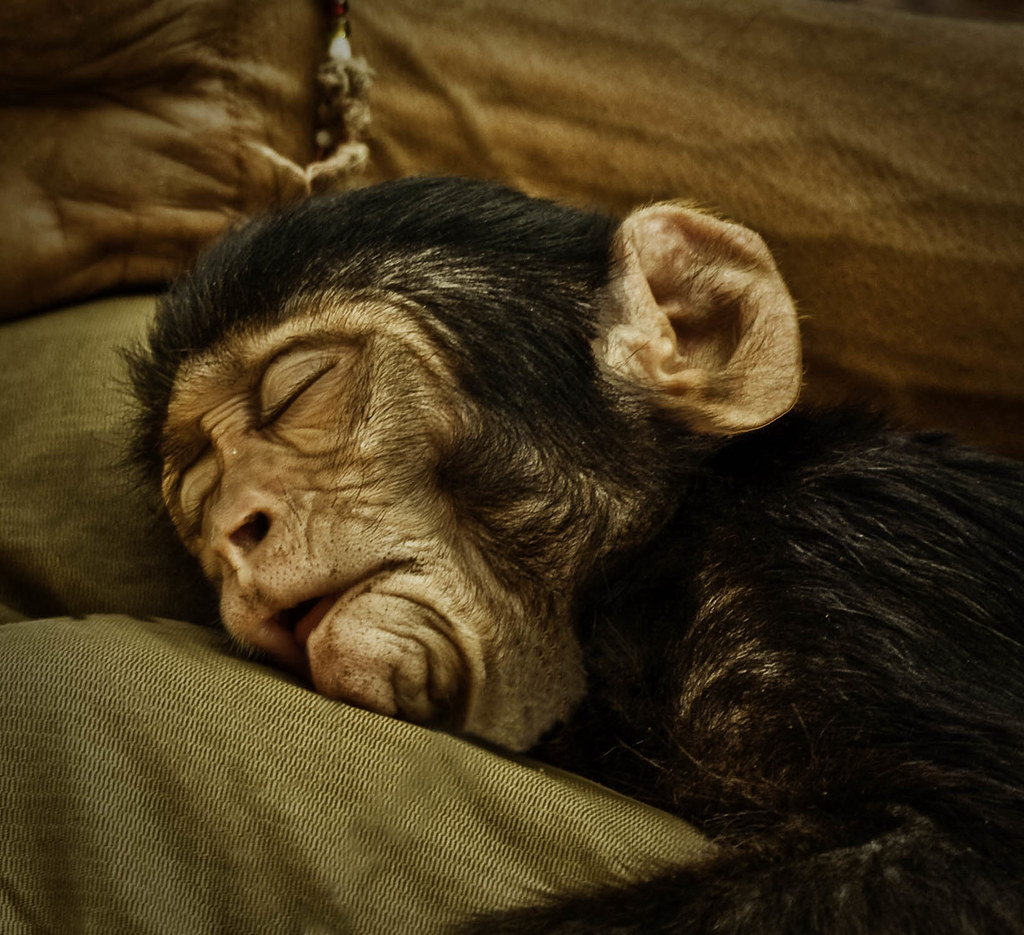 Image result for sleepy monkey