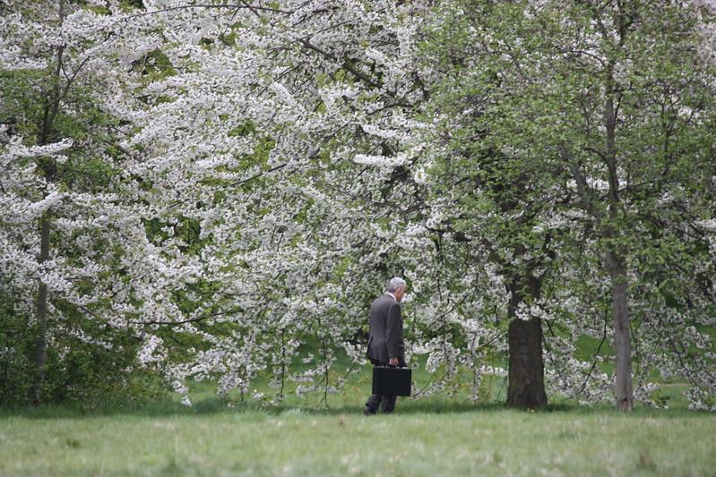 Homme d'affaires à Hyde Park au printemps