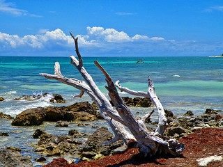 Driftwood and the Pelican | by Phil's 1stPix