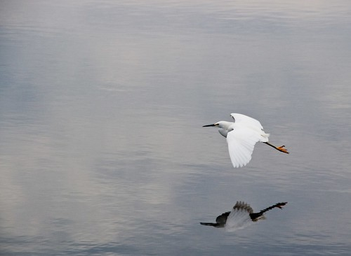 Egret and reflection   by J e n s