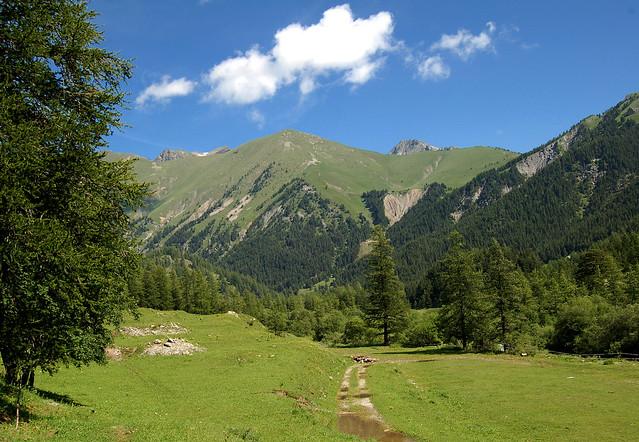 La piste vers les alpages - Casterino - Tende (Alpes-Maritimes)