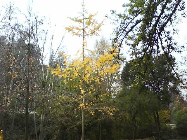 Yellow my heart 2