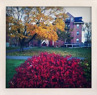 Campus in autumn.