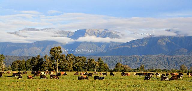 whataroa farmland