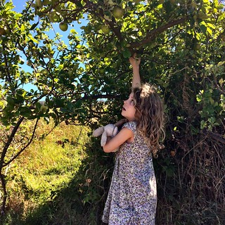 Reaching for the wild apples at Copper Alley Bay | by miaow