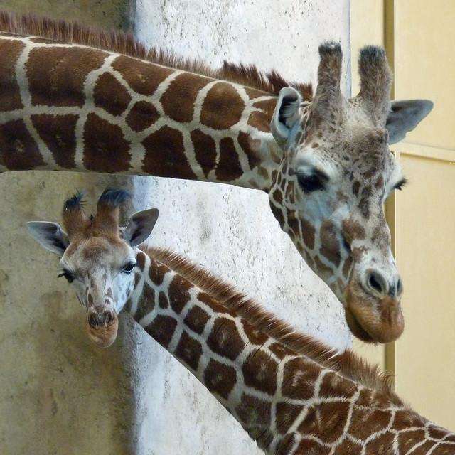 Bringing Up a Really Tall Baby