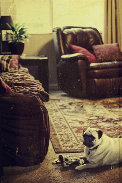 Koby watching.....