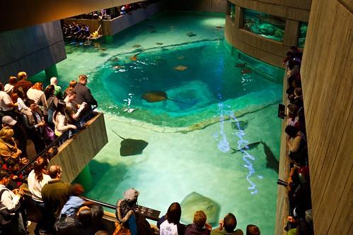 National Aquarium in Baltimore   On Saturday, I had to ...