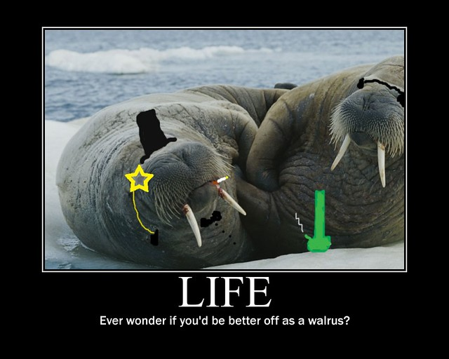 Life, walrus - demotivational poster